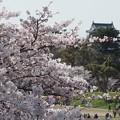 岡崎城桜景色2