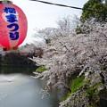 岡崎城桜景色3