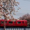 桜と赤い電車2