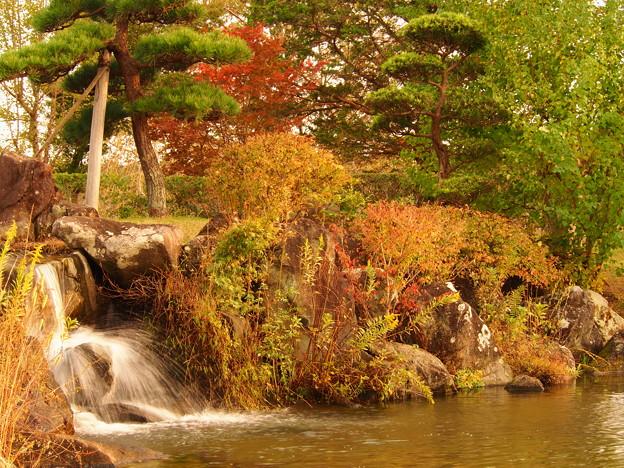 池と紅葉(墓苑にて)
