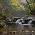 Photos: 神宿る森