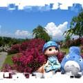 写真: 夏の思い出日記