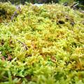 小さな苔の世界