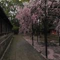 Photos: 御香宮神社にて2