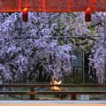 Photos: 平野神社にて