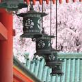 Photos: 平安神宮にて