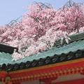 Photos: 平安神宮にて2