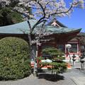 写真: 桜咲く鞍馬寺1 京都・鞍馬
