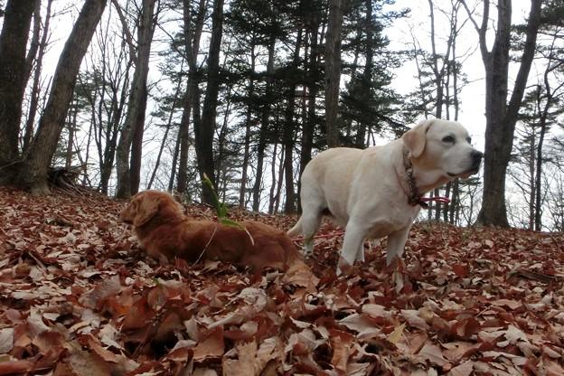 落ち葉の林