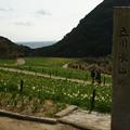 写真: 立川水仙郷 標示