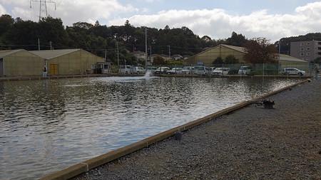座間養魚場