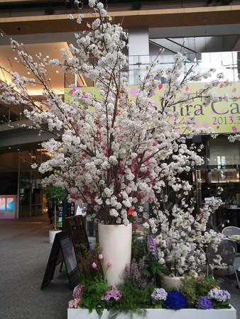 丸の内SakuraCafe01