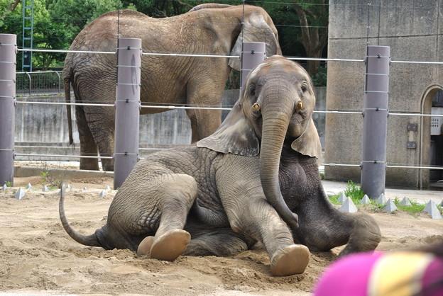 念願の砥部動物園にお邪魔したでござる!