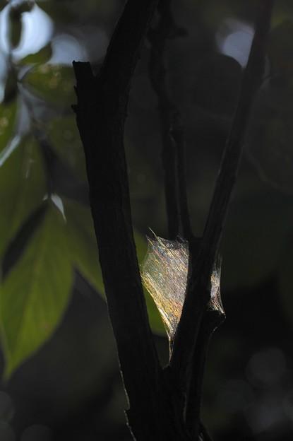 Photos: 虹の隠れ家