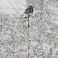 Photos: 雪見鳥