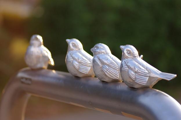 +Silver Sparrow+