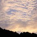 写真: 秋の夕暮れ・・・カラスの舞