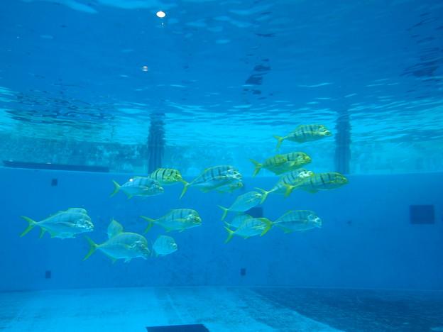 Photos: 魚たち