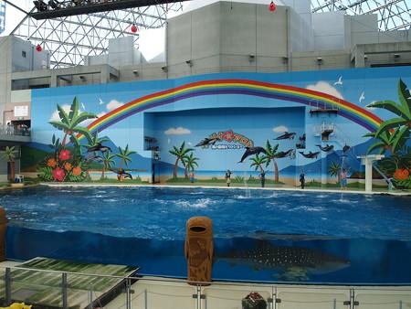 イルカ10頭のジャンプ