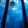 Photos: 巨大水槽