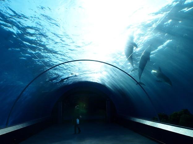 Photos: dolphin fantasy