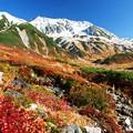 写真: 秋色の雷鳥沢