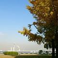 横浜山下公園 秋