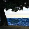Photos: 清水ヶ丘公園