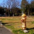 Photos: 横浜 根岸台