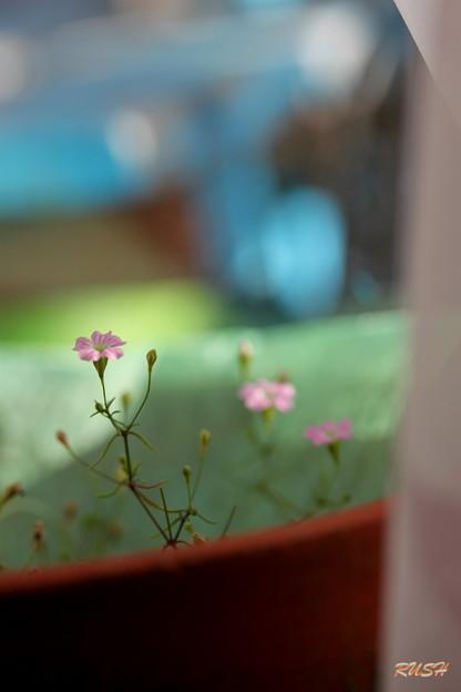 野の花の妖精~