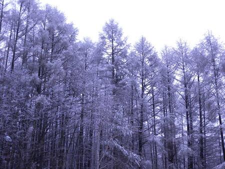 4月の雪景色