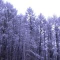 写真: 4月の雪景色