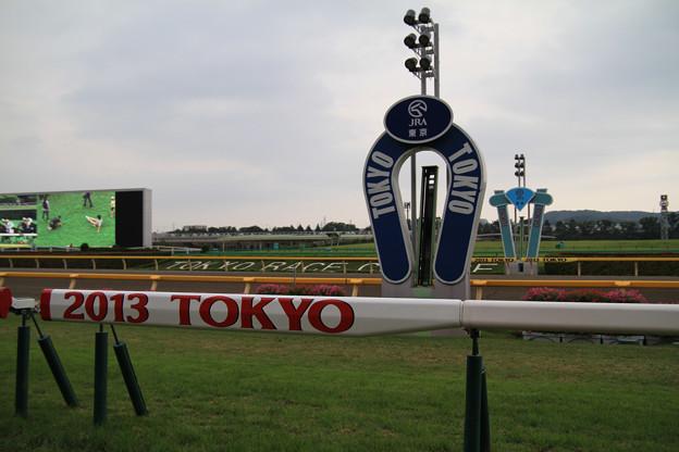 Photos: 芝コース馬場解放_7(13/06/23・東京競馬場)