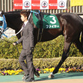Photos: ファイヤー パドック(14/02/22・第64回 ダイヤモンドステークス)