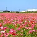 Photos: ~~Pink Wave~~