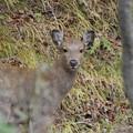 写真: 小鹿さん