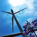 写真: 安倍川河口の風車