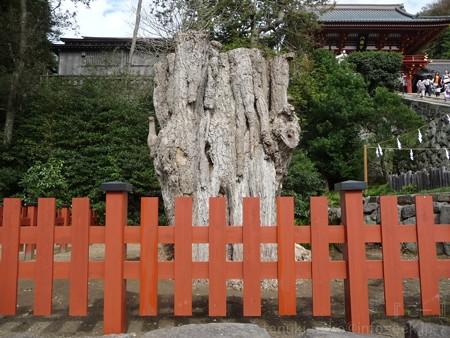 121015-八幡さま (9)