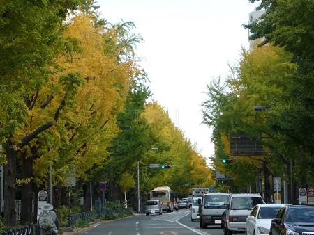 121115-紅葉 山下公園通り (2)