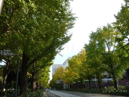 121115-紅葉 山下公園通り (5)