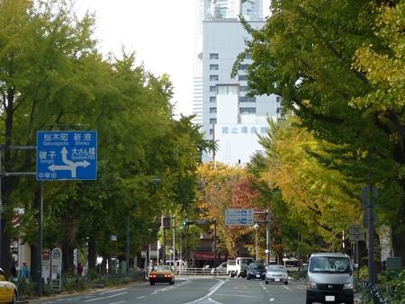 121115-紅葉 山下公園通り (6)