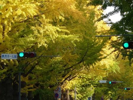 121115-紅葉 山下公園通り (9)