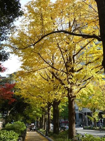 121115-紅葉 山下公園通り (20)
