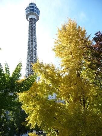 121115-紅葉 山下公園通り (48)