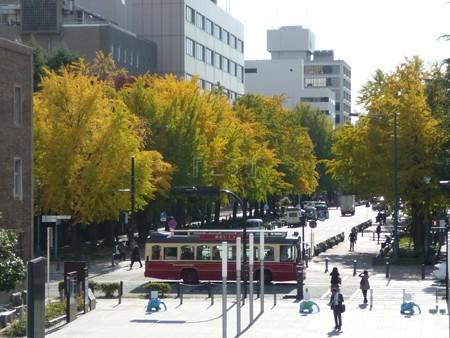 121115-紅葉 日本大通り・県庁 (1)