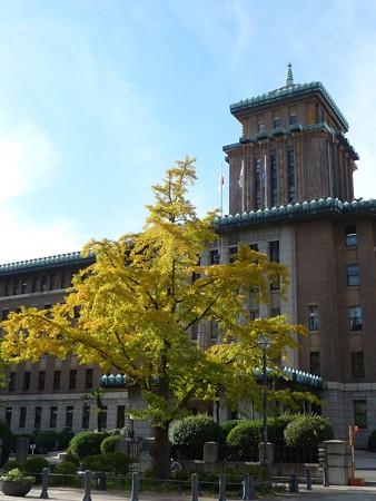 121115-紅葉 日本大通り・県庁 (12)