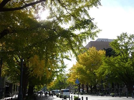 121115-紅葉 日本大通り・県庁 (13)