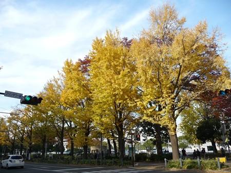 12.11/29 紅葉 山下公園通り (4)