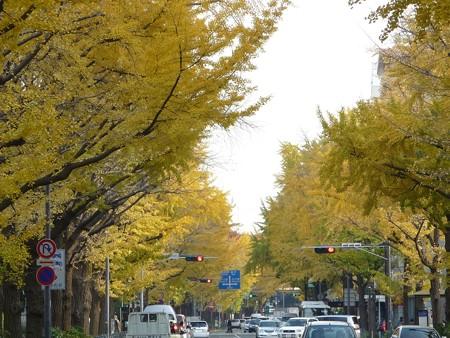 12.11/29 紅葉 山下公園通り (23)