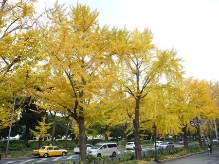 12.11/29 紅葉 山下公園通り (28)